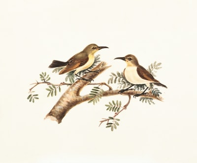 two brown and white birds perching on tree branch illustration