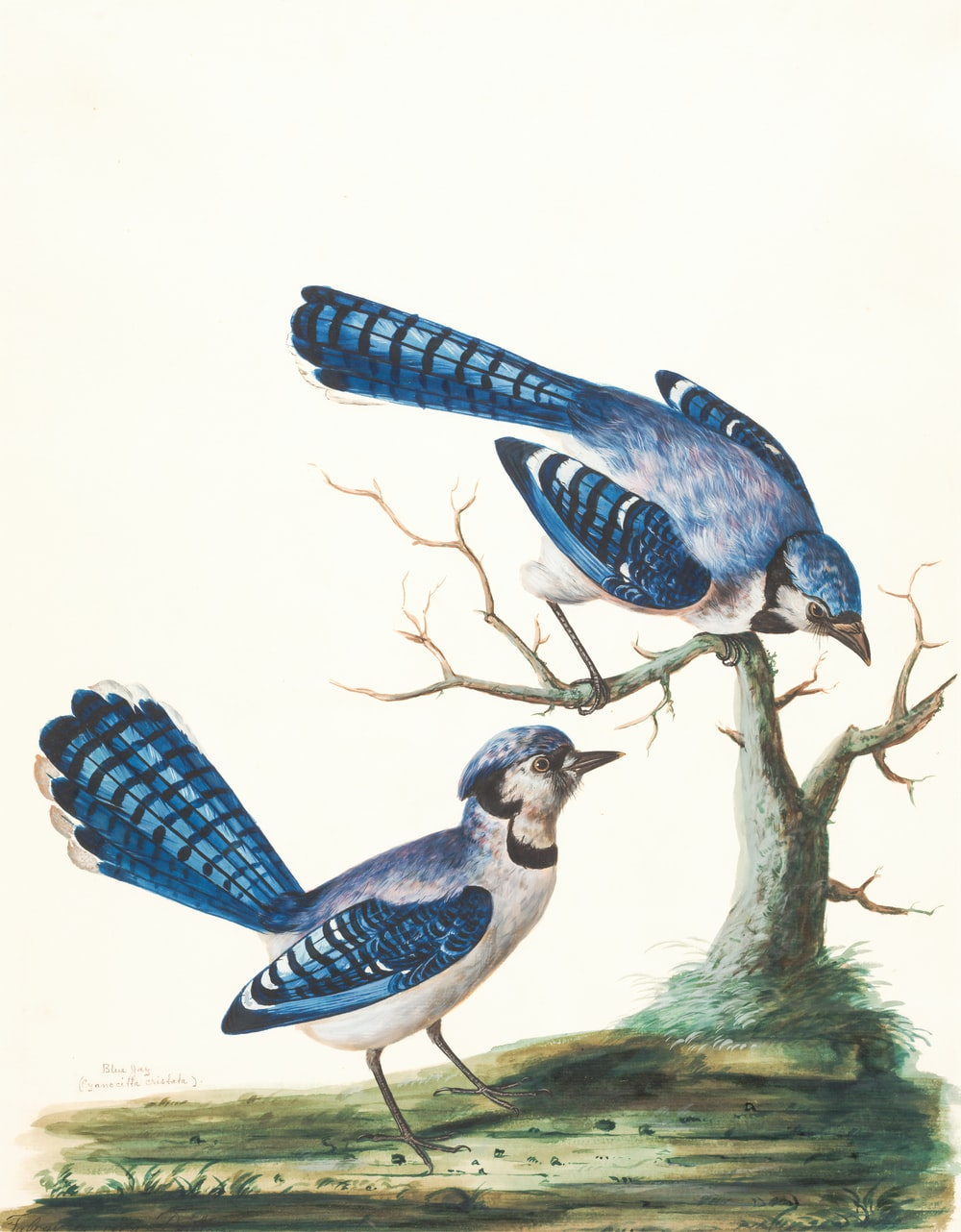 two blue birds painting