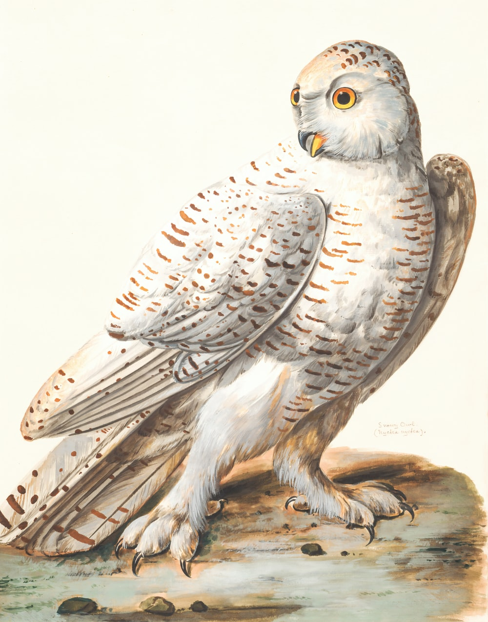 white owl painting