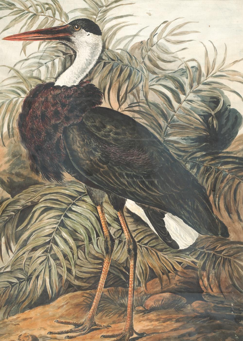 black and white crane bird painting
