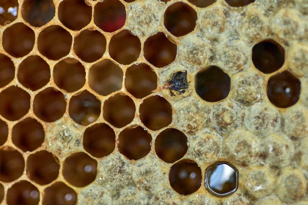macro photography of honeycomb