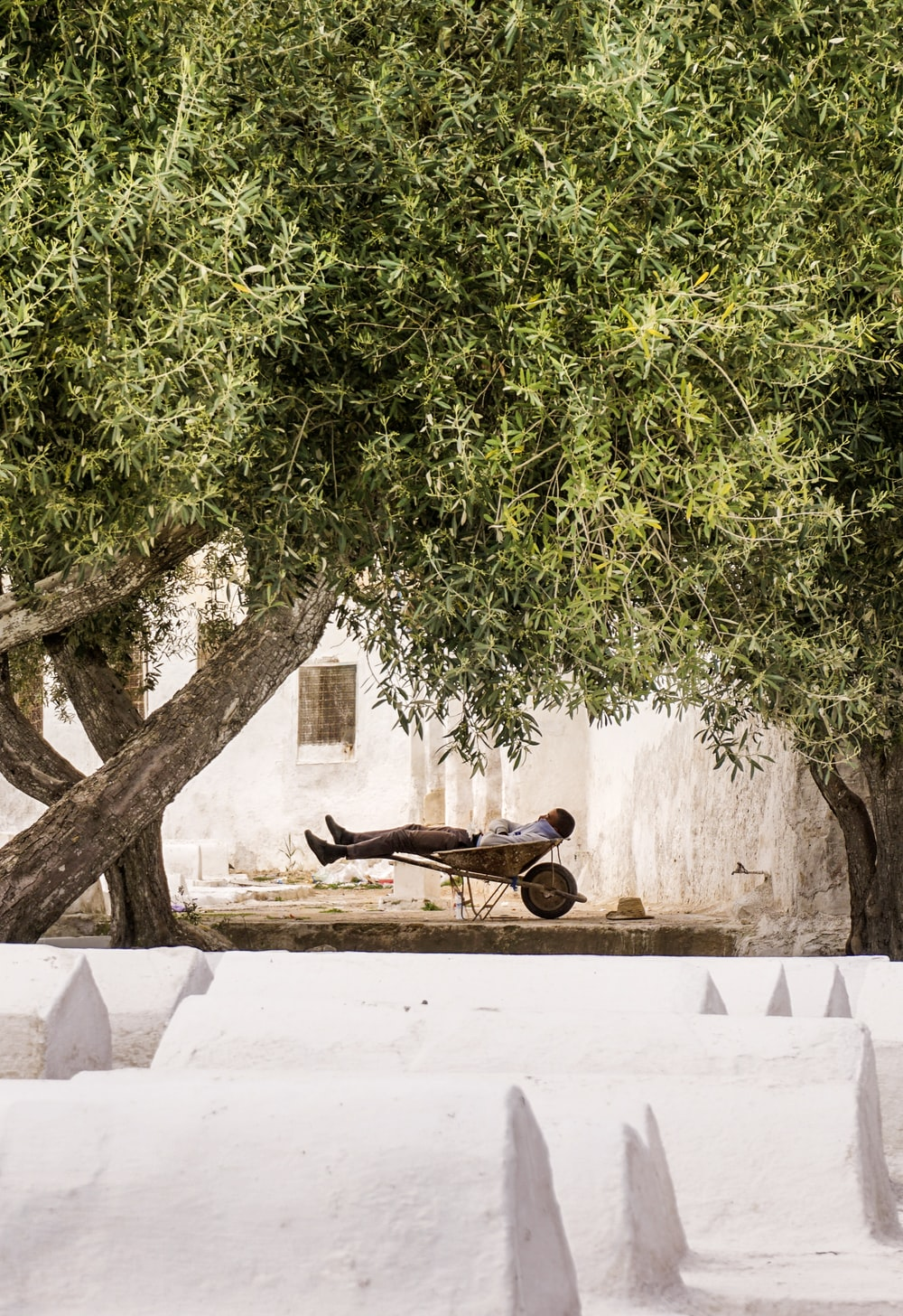 person lying on wheelbarrow under green tree during daytime
