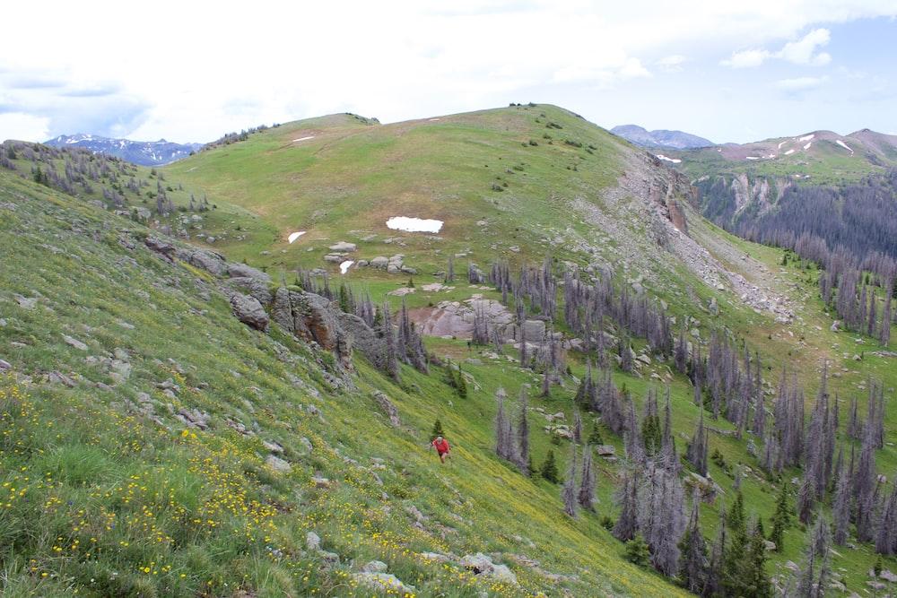 green grass field on mountain