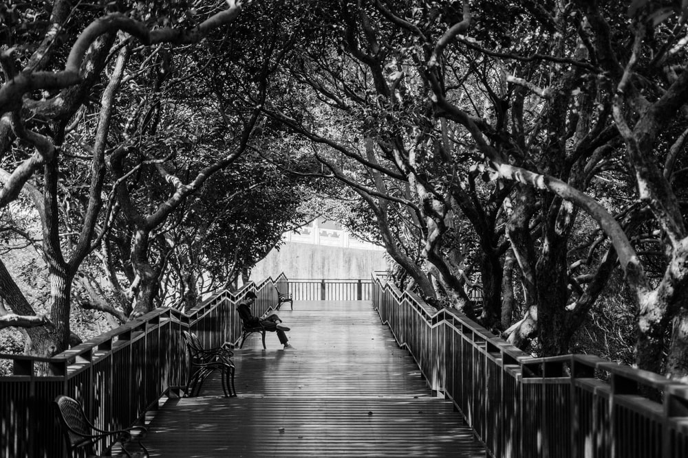 person sitting on dock beside railing and near trees during daytime
