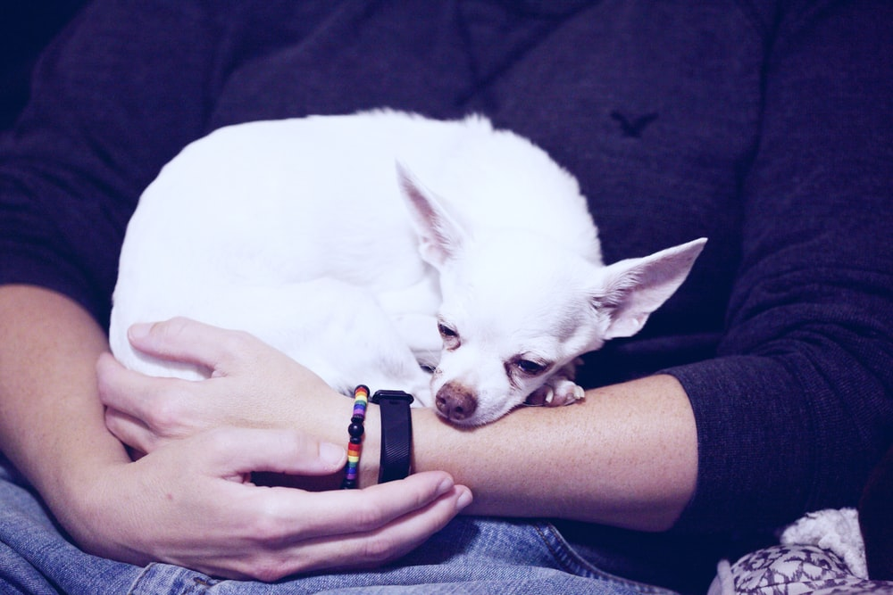 person holding white dog