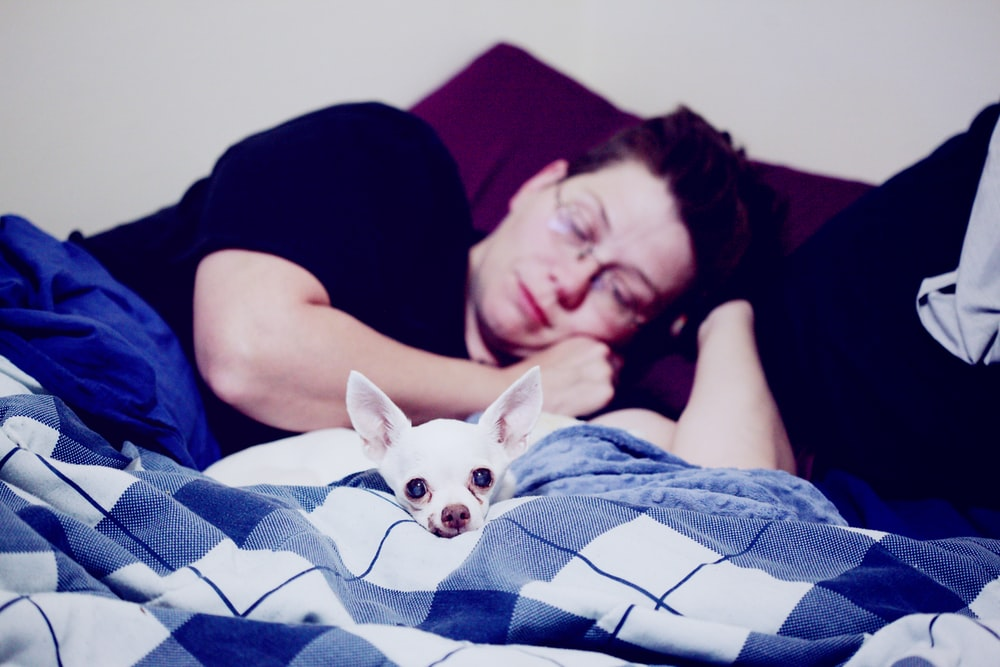 man lying down in bed beside white dog