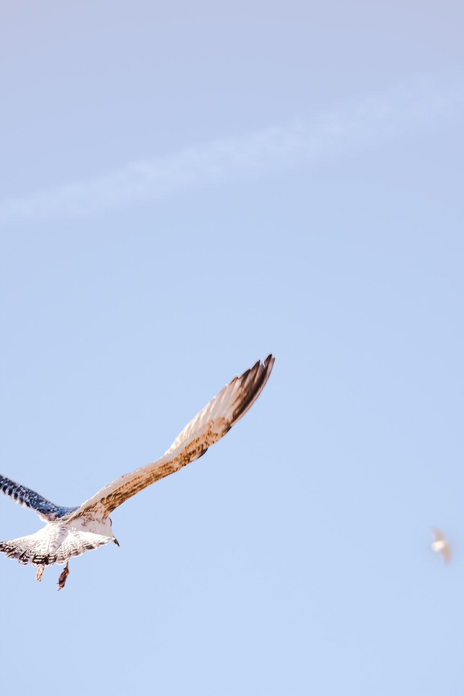 beige eagle under blue sky