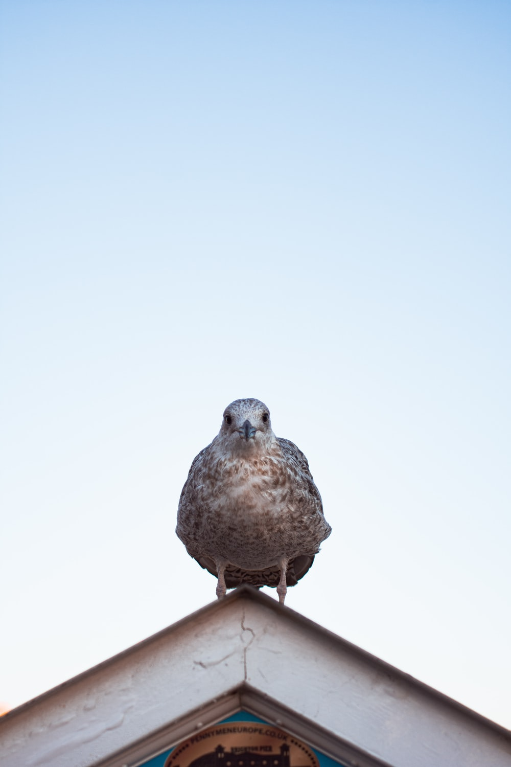 brown bird on house roof