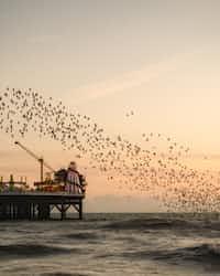 A Murmerring of Starlings   buddha stories