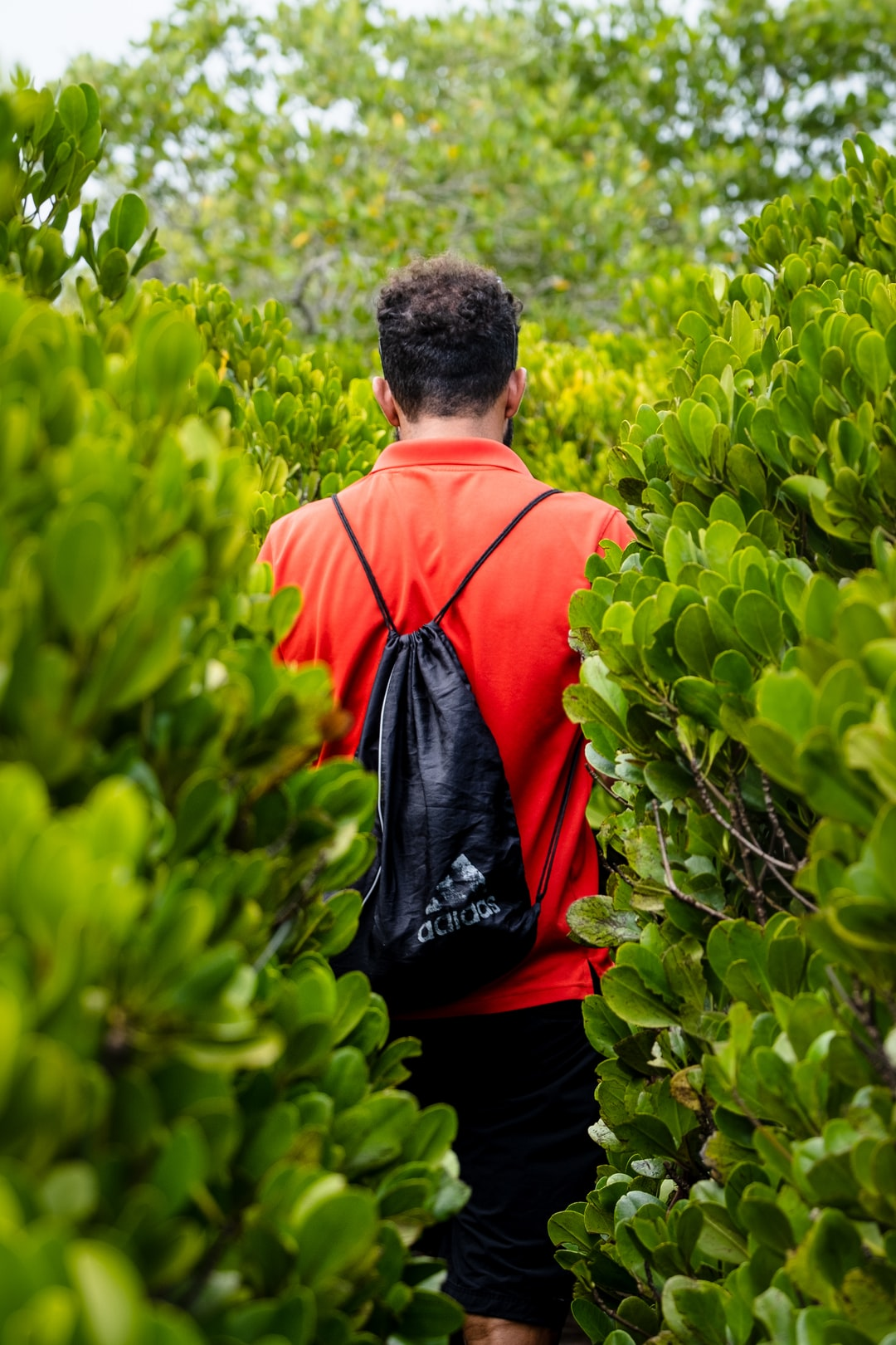 Exploring the mangrove forest, Ilha do Ibo, Mozambique