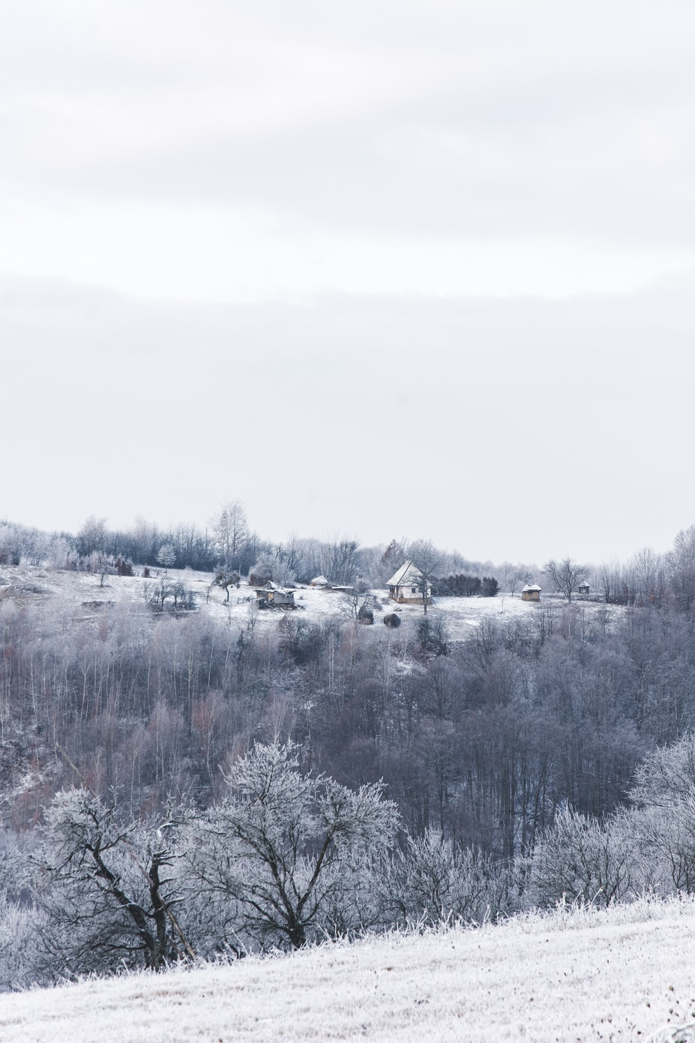 snow covered trees and houses during daytime