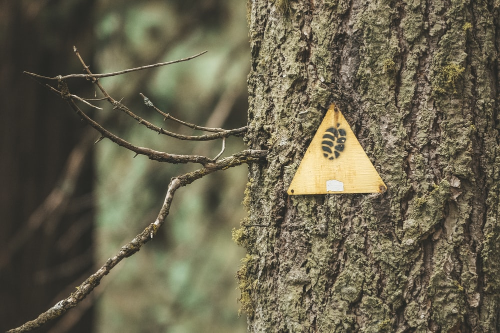 yellow and brown wooden arrow sign