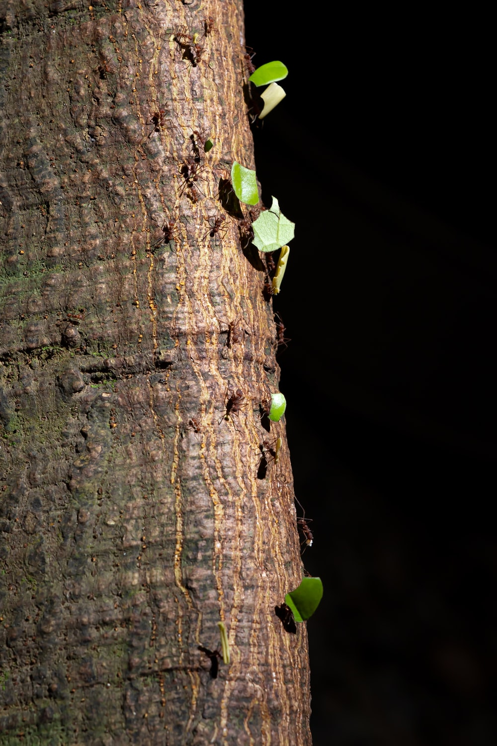 green fruit on brown tree trunk