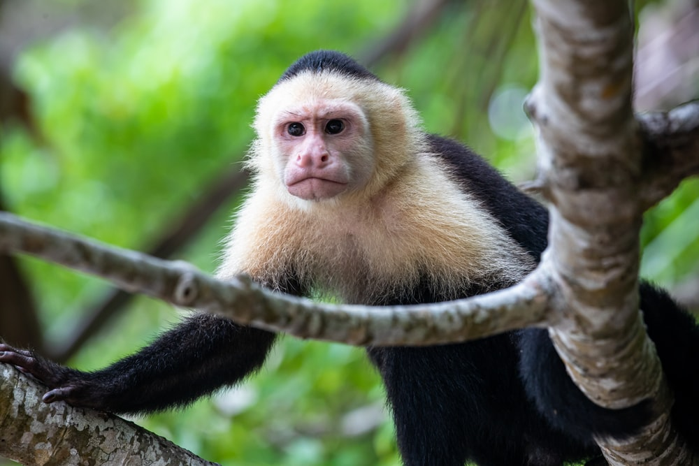 black and white monkey on brown tree branch during daytime