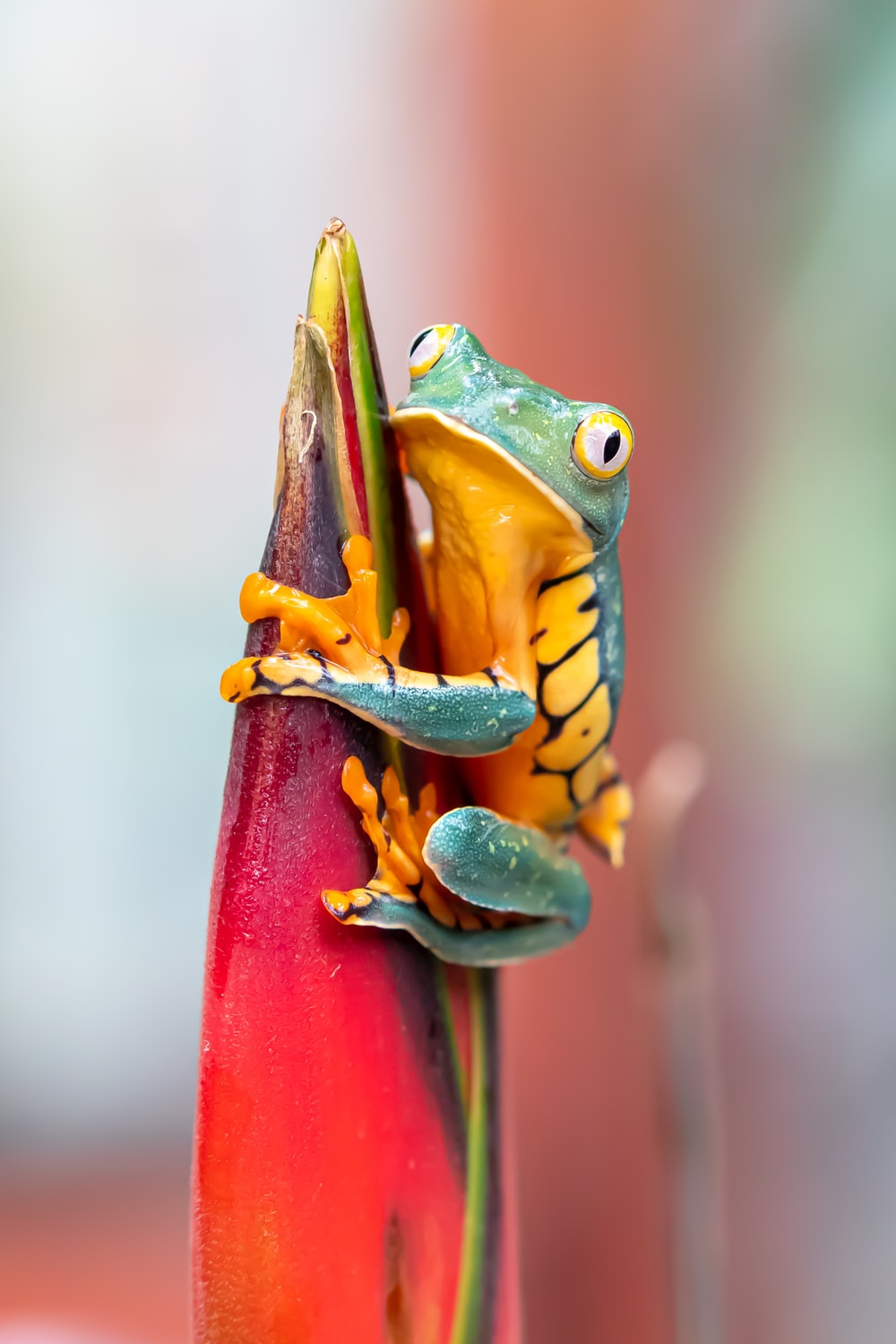 green frog on red post