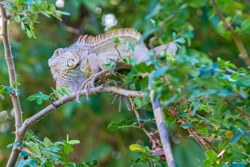 green and brown lizard on brown tree branch during daytime