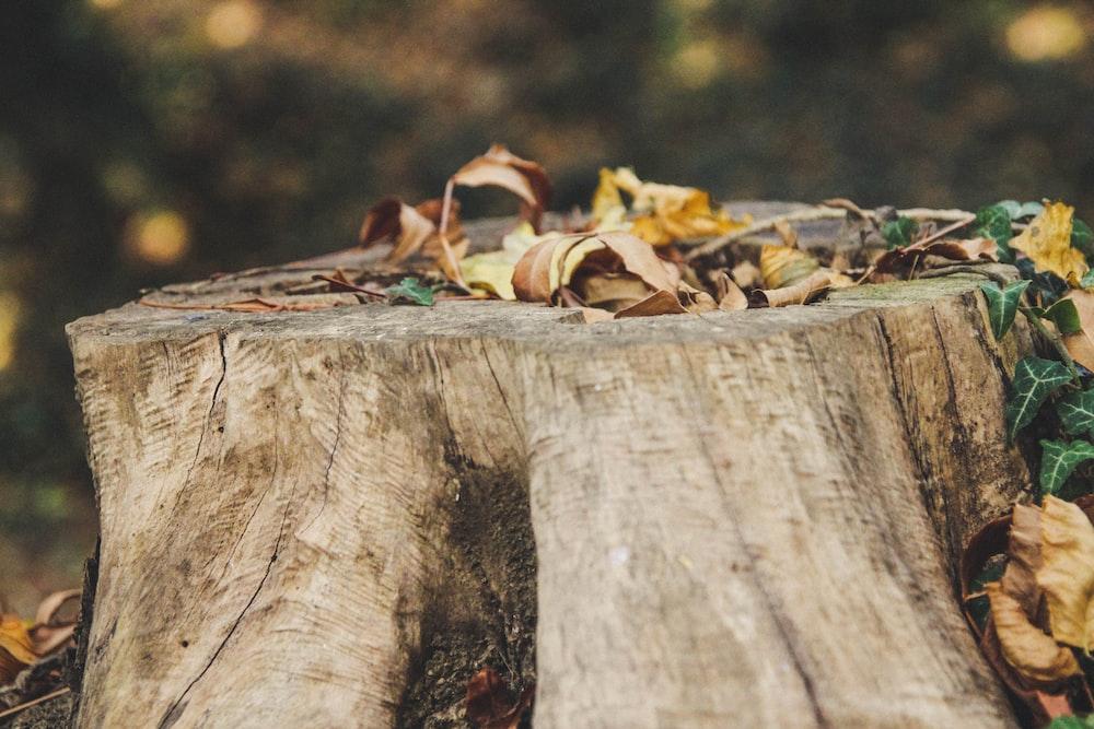 brown dried leaves on brown wooden log