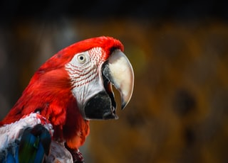 red and white bird in close up photography