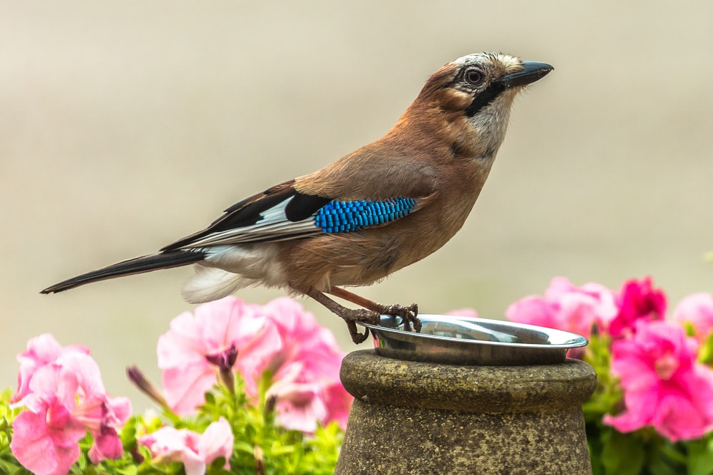 blue and white bird on brown concrete post during daytime