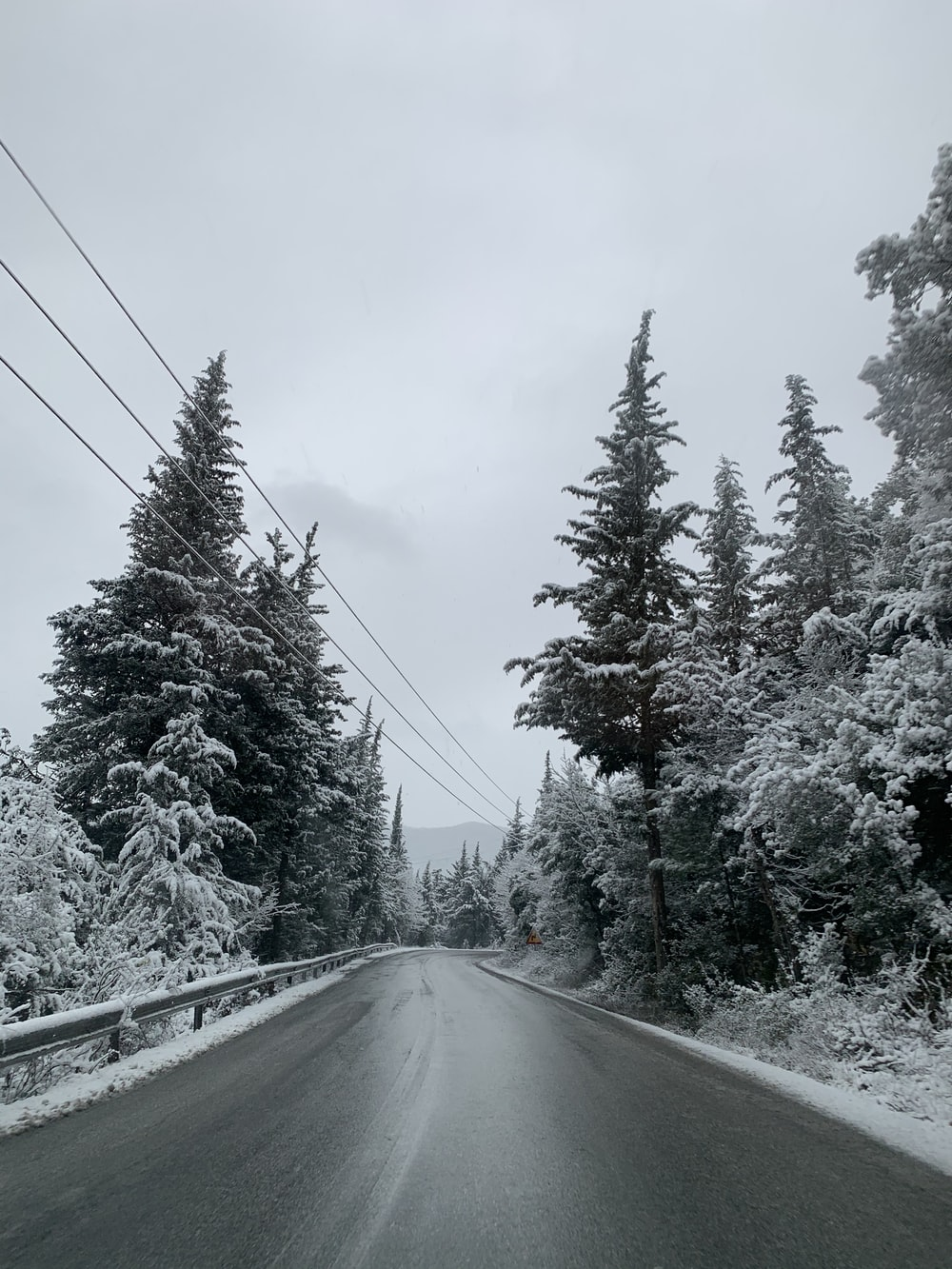 snow covered trees and road during daytime