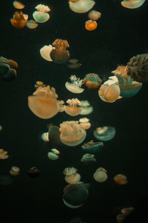 white jellyfish in water during daytime