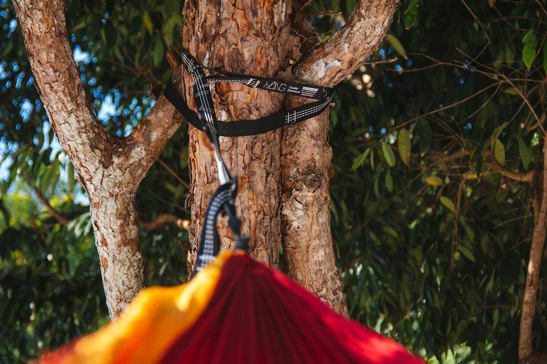 hammock and a tree