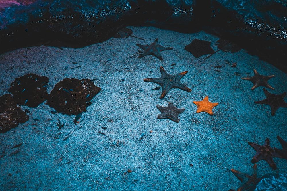brown starfish on gray sand