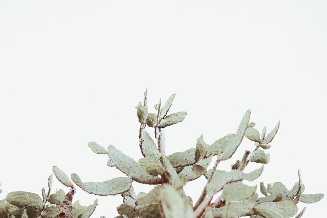 Minimal Cactus - unsplash