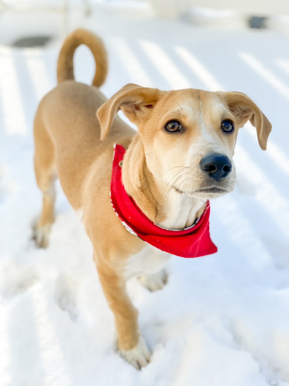 brown short coated medium sized dog on snow covered ground during daytime
