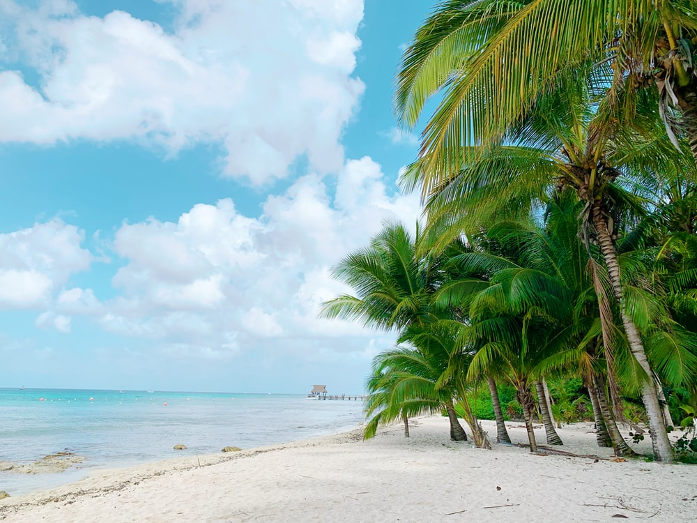 palm trees on the beach in Cozumel