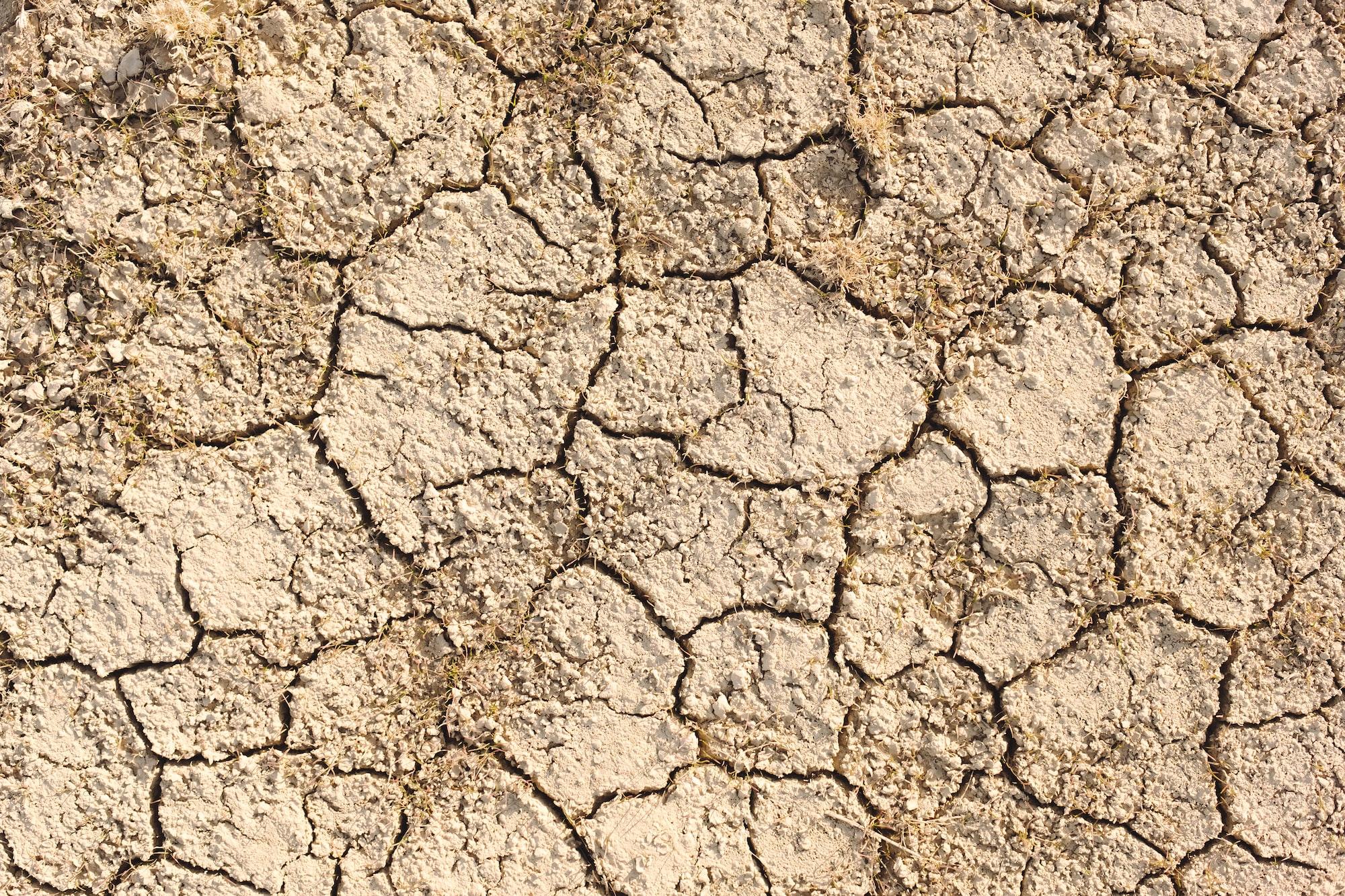 Revelan nuevo método de medir el impacto del cambio climático en la agricultura