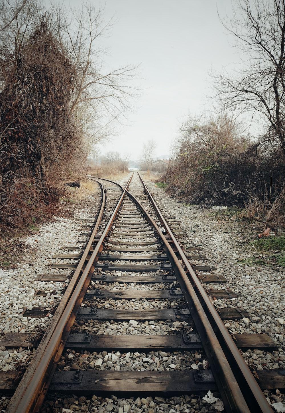 brown metal train rail between bare trees during daytime