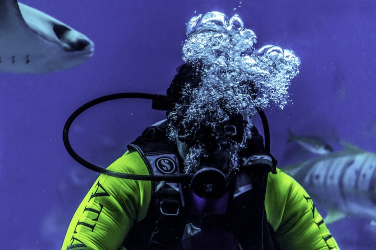 Scuba diving off the Palm Island