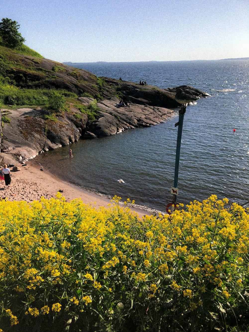 yellow flower field near beach during daytime