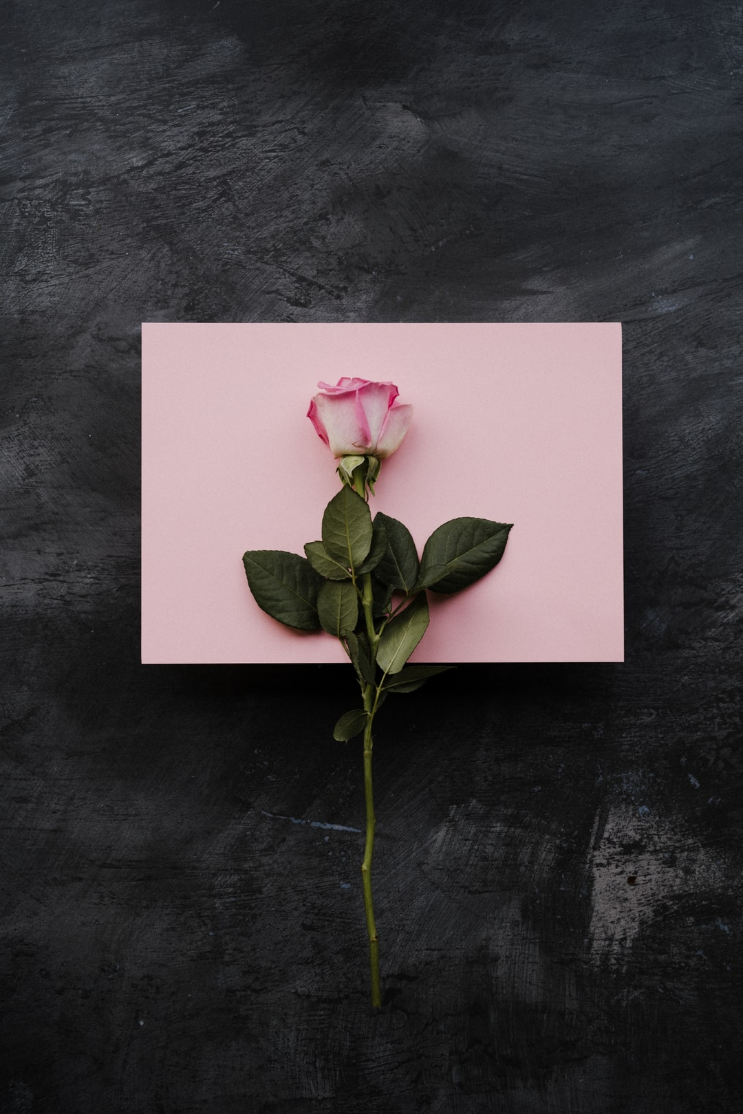 pale pink rose on a dark background with pink card, love, valentines