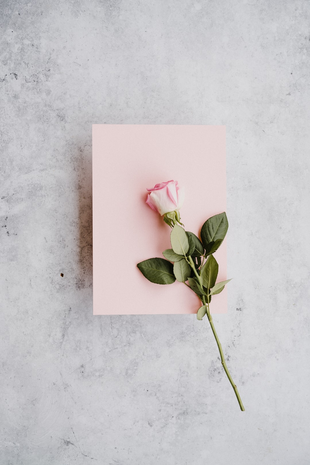 Pale pink rose with pink card