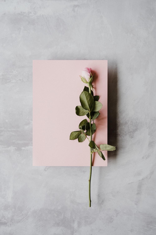 pink rose on white printer paper