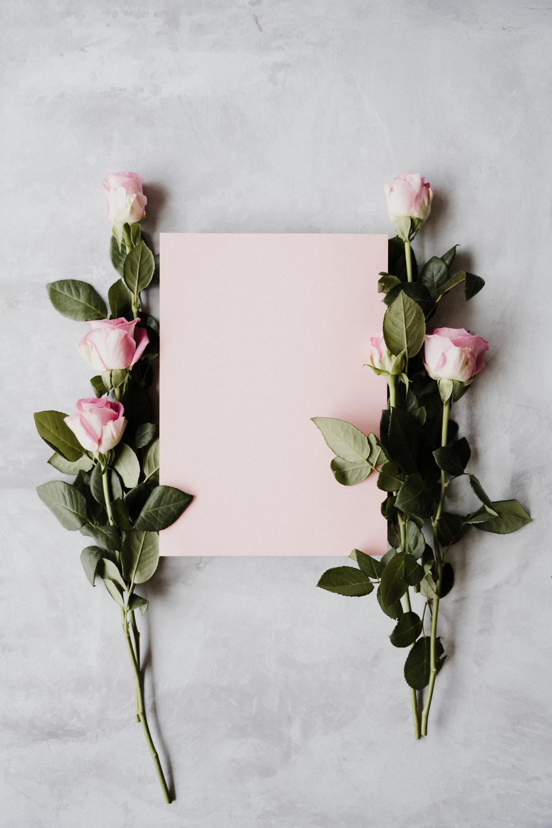 pink roses and pink card with space for text