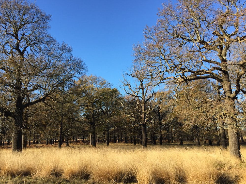 leafless trees on brown grass field during daytime
