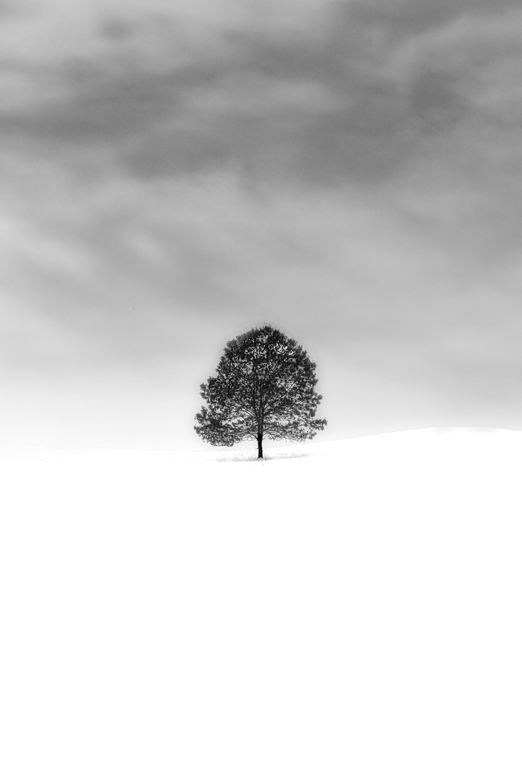 Черное-белый пейзаж - учимся композиции