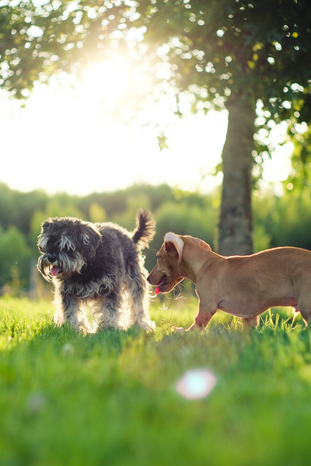 brown short coated dog on green grass field during daytime