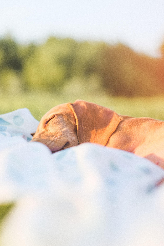 Milo durmiendo después de un largo día de jugar en el río