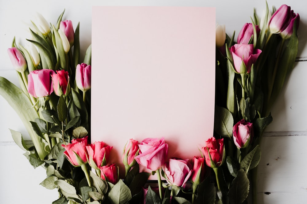 pink and white tulips in white vase