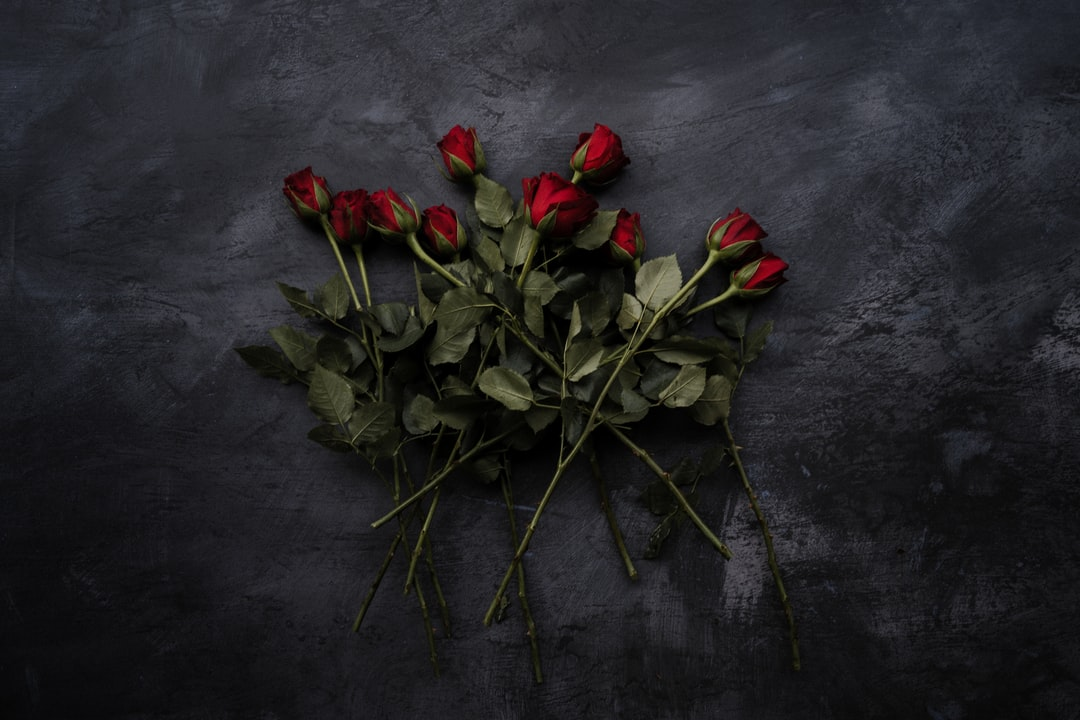 Pile of Red Roses, Valentines, Love - unsplash