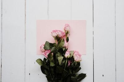pink flower on black pot roses teams background