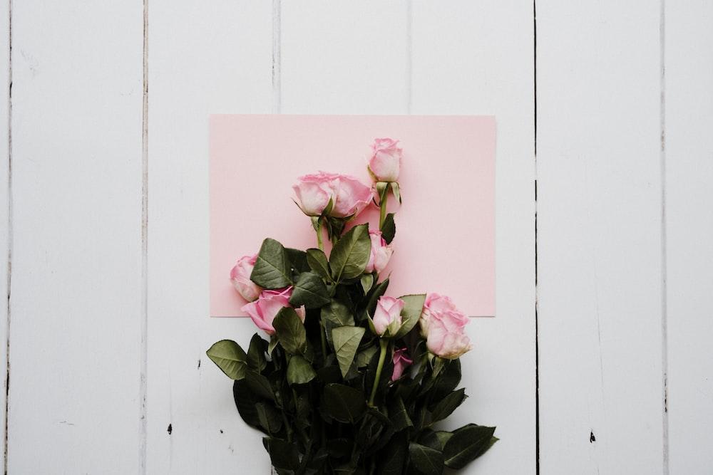 pink flower on black pot