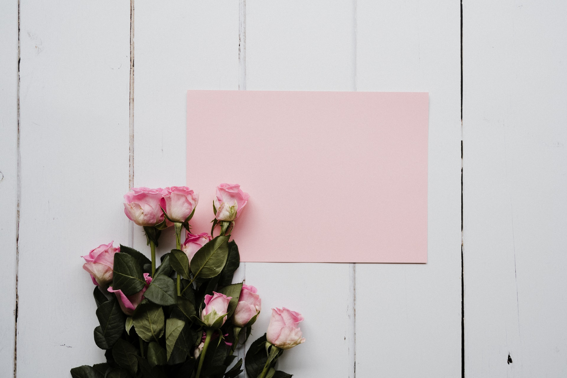pink rose bouquet on white wooden wall