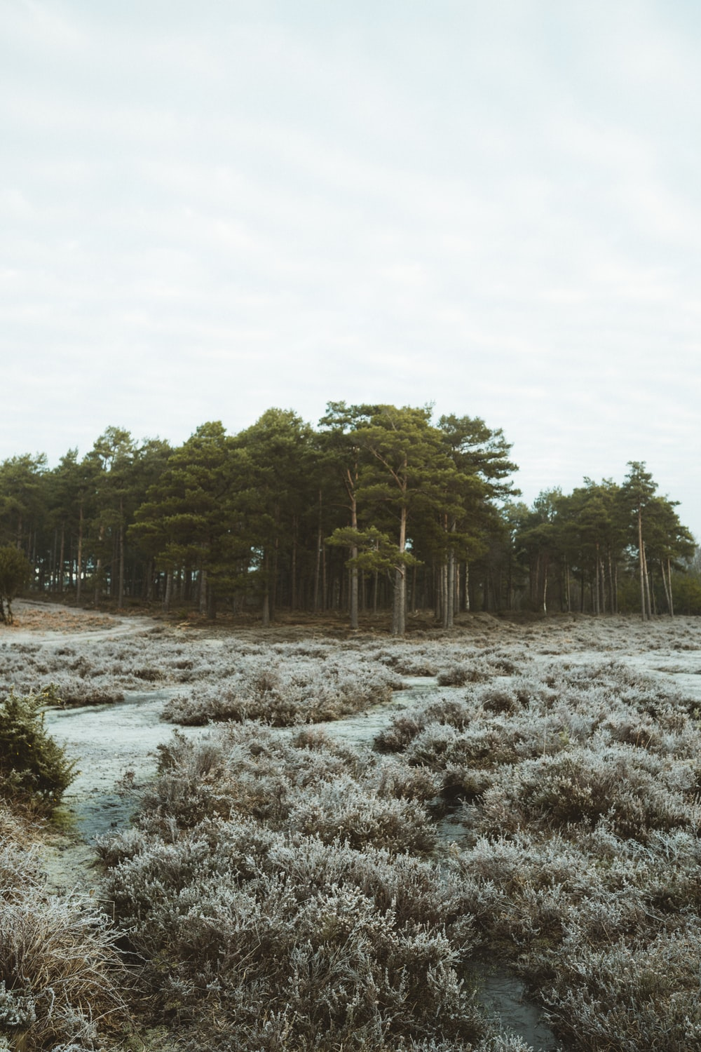 green trees on white snow covered ground during daytime