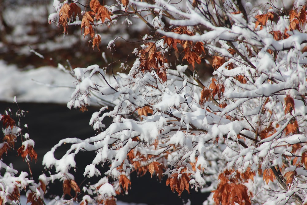 brown and white tree branches