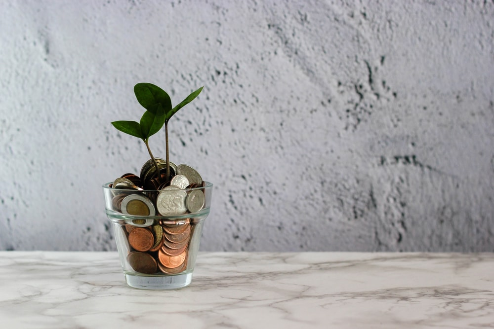 green plant in clear glass cup